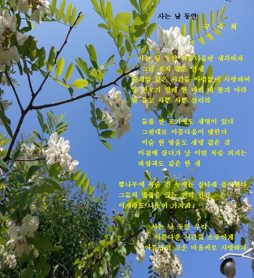사는 날 동 2017-05-11.jpg