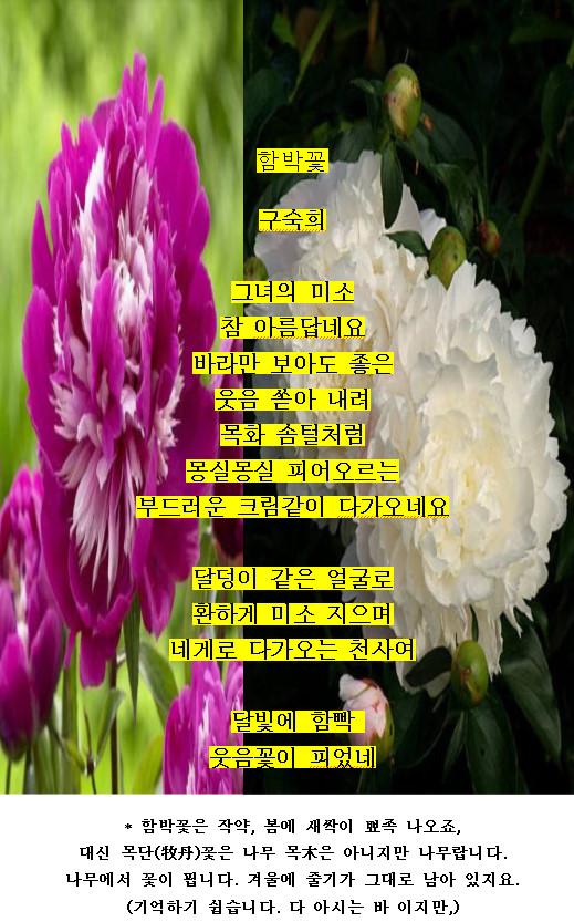 함박꽃 이글루2018-05-29.jpg