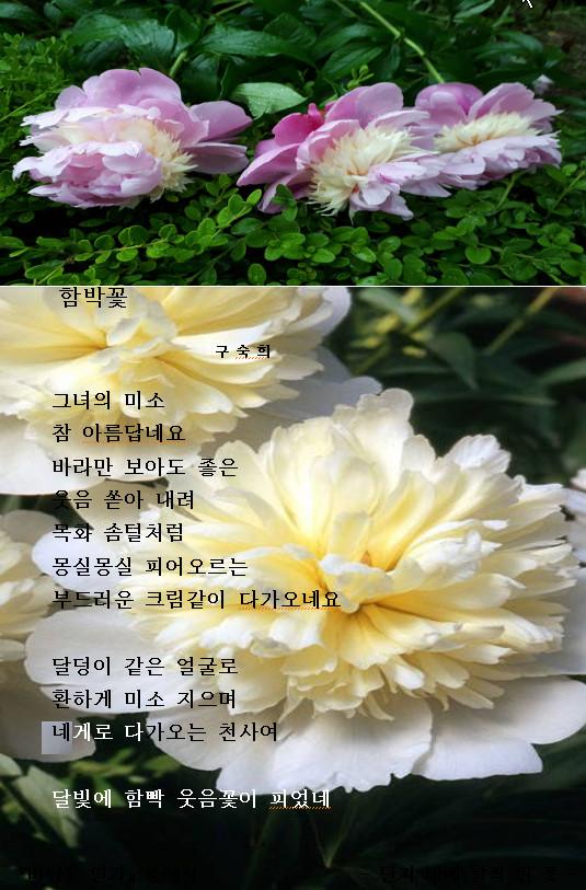 함박꽃 2018-05-26.jpg