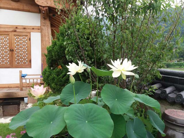 lotus01.jpg