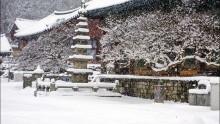 시리도록 새하얀 눈이 내리네..
