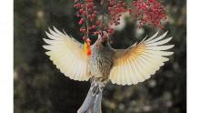 자유롭게 나는 저 새을 보라